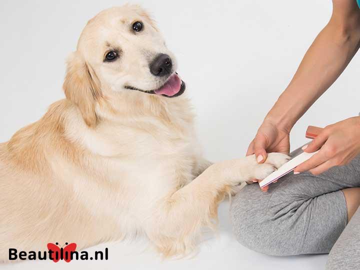 https://www.beautilina.nl/wp-content/uploads/hondenmanicure-720x540.jpg